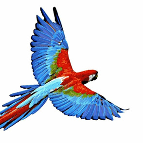 Parrot- Large Scale