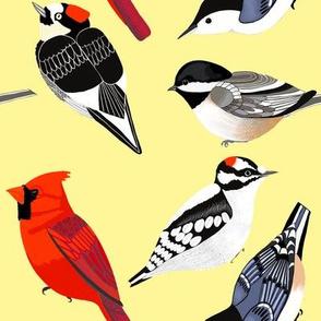 birds yellow