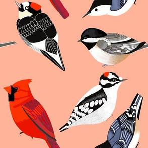 birds coral