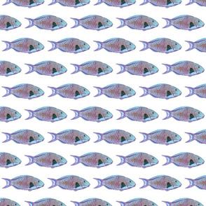 parrotfish pattern