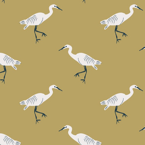 Swamp Herons