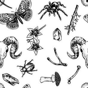 Animal skulls, bones and curiosities - White