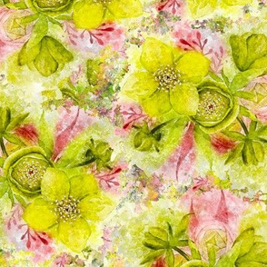 dreamy watercolor hellebore yellow lime