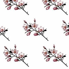Pink Magnolia Stem