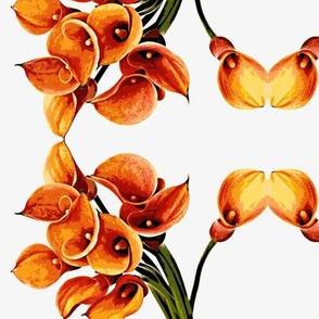 Calla Lilies-small