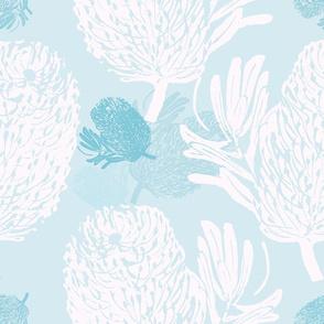 Banksia Marginata  pale blue