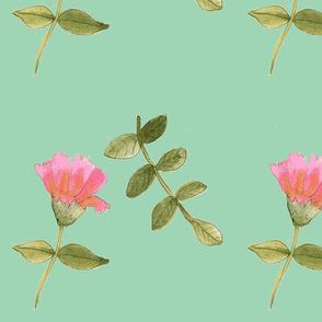 delicatedrawings (2)-ch