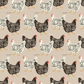 farmhouse chickens B-01