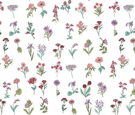 Rrwildflowers-colors_shop_preview
