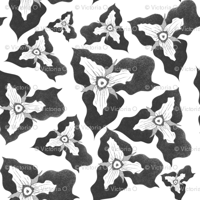 Painted_trillium_clump_2_black_and_white-01_preview