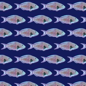 parrotfish pattern blue