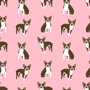 boston terrier brown coat dog breed fabric  pink