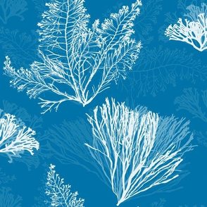 Ocean Flora in Cerulean Blue