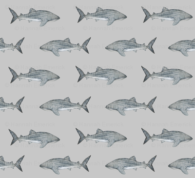 Whale-shark_preview