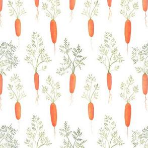 Watercolor Carrots