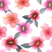 Watercolor floral // hibiscus flowers on white