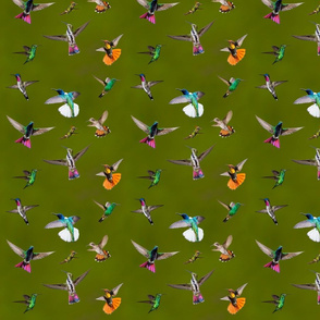 Hummingbirds of T and T 2 -  dappled forest background