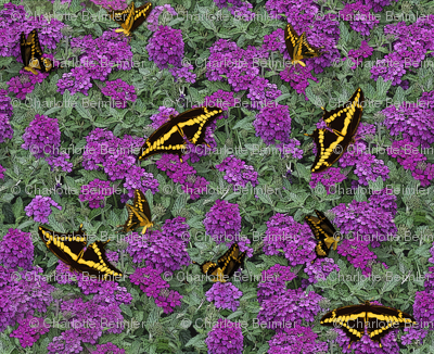 Verbena and Swallowtails Brocade - Purple