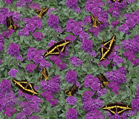 Verbena and Swallowtails Brocade - Purple fabric by engravogirl on Spoonflower - custom fabric
