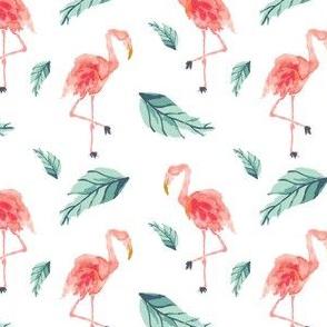 IBD Flamingo PLAM B