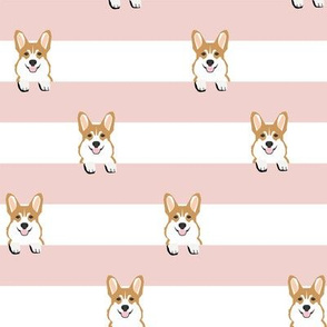 corgi stripes pink