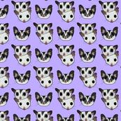 Three sugar gliders on lilac background