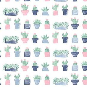 House Plants in Fresh