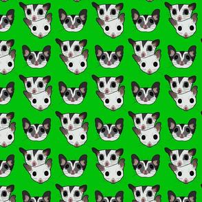 Three sugar gliders on green background