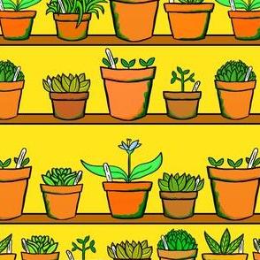 Green house Plant Pots - Yellow