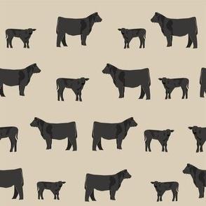 angus black cattle farm animal tan