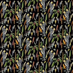 Cockatiels black