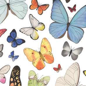 Very Large Scale Watercolor Butterflies