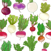 Beets, Turnips & Rutabagas