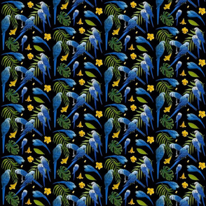 Spix Macaws. black