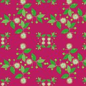 2941 Australian Buttonbush Pink Hot