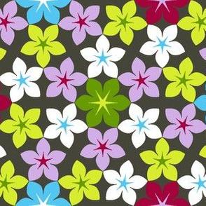 07473458 : U65 flowers 3x2 : hike