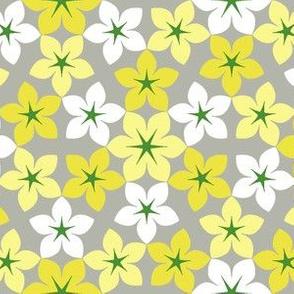 07473527 : U65 flowers 3 : caprican