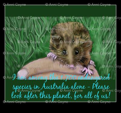 Endangered Pygmy-possum Australian-ed
