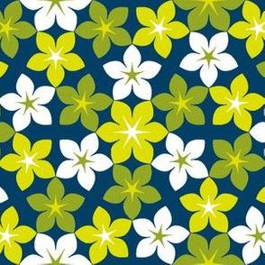 07474070 : U65 flowers 3 : flickering