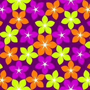 07474481 : U65 flowers 3 : market garden
