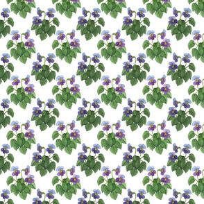 watercolor wild violets blue 4x4