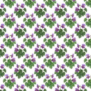 watercolor wild violets purple 4x4