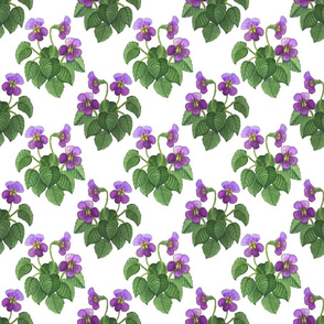 watercolor wild violets purple