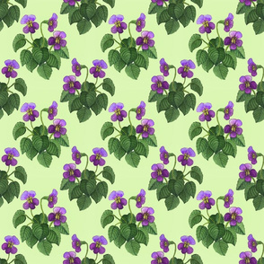 watercolor wild violets purple on green