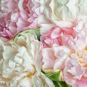 Rzina-zinchik_blooming-peonies_shop_thumb