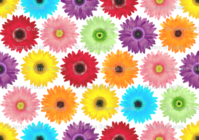 Colorful Gerbera Daisy Pattern