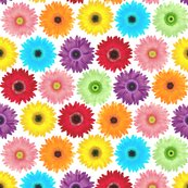 Rgerbera_daisy_pattern_shop_thumb