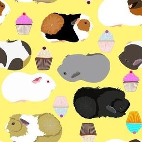 guinea pigs yellow