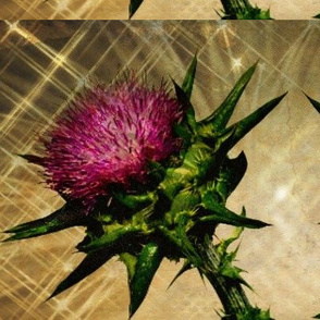 A Bissel of Thistle