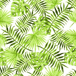 monstera and palm leaves - green